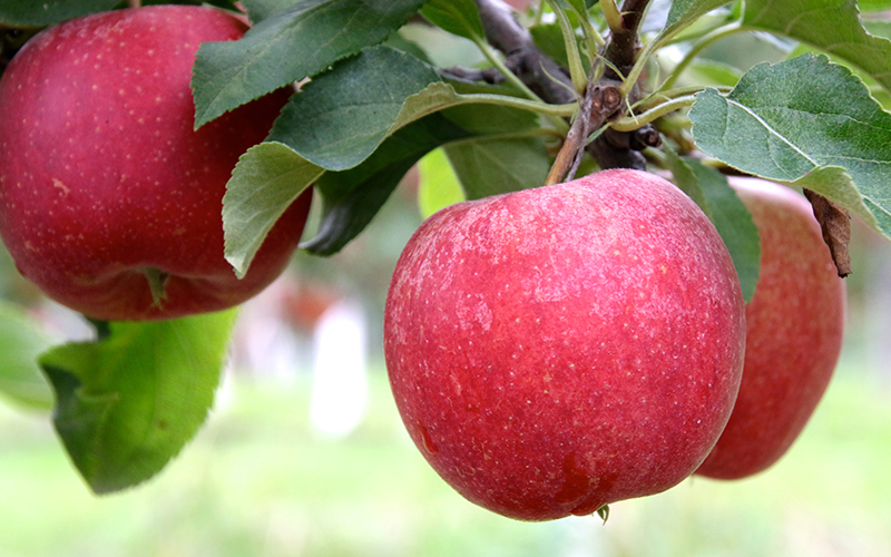 Apples & Ciders in Michigan's Small towns