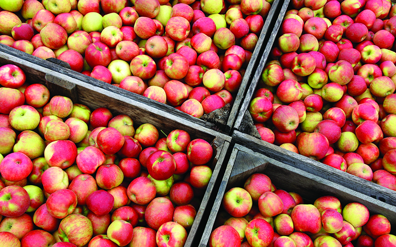 Handcrafted Apple Food and Drink